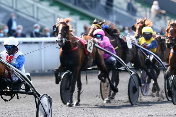 Photo de GUNNAR LA MESANGE cheval de TROT ATTELE