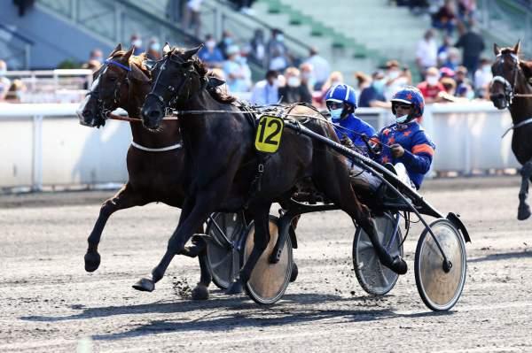 Photo de DOMINGO D'ELA cheval de TROT ATTELE
