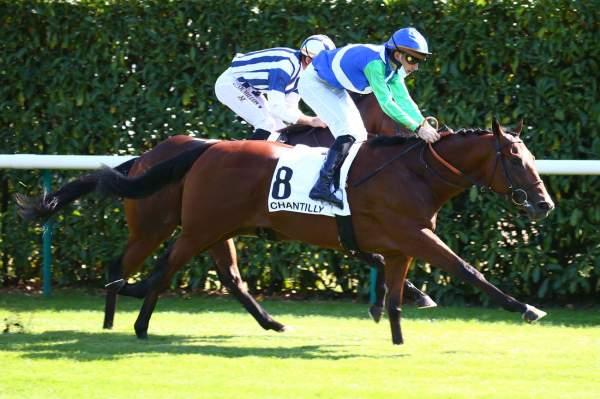 Photo de CHEZ PIERRE cheval de PLAT