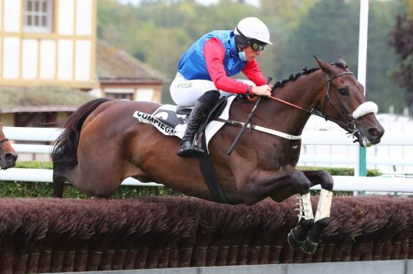 Photo de GAMIN D'OUDAIRIES cheval de STEEPLE CHASE