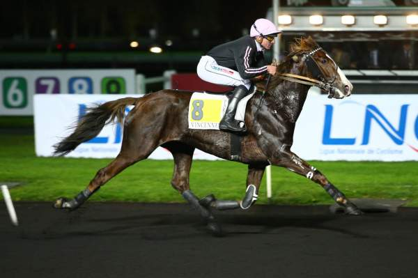 Photo de EFARO cheval de TROT ATTELE