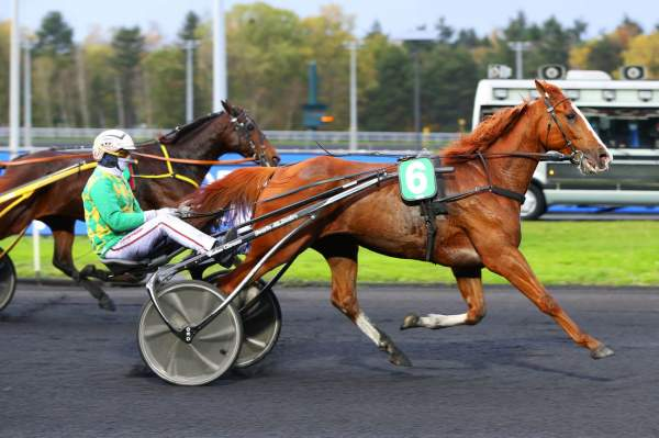 Photo de DORGOS DE GUEZ cheval de TROT ATTELE
