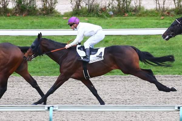 Photo de BERNOUVILLE cheval de PLAT