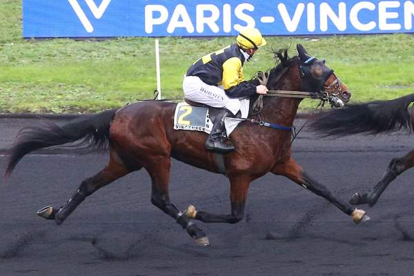Photo de IBRA DU LOISIR cheval de TROT MONTE