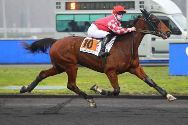Photo de GALDRIC D'ECHAL cheval de TROT MONTE