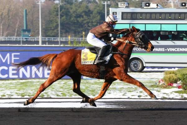 Photo de EDITION GEMA cheval de TROT MONTE