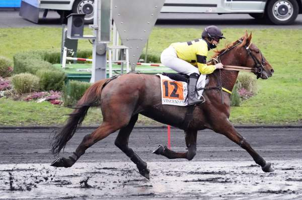 Photo de GATTOPARDO cheval de TROT MONTE