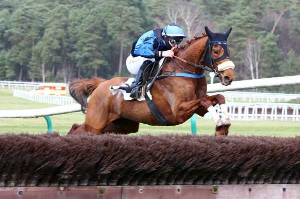 Photo de CHESTNUT DREAM cheval de STEEPLE CHASE