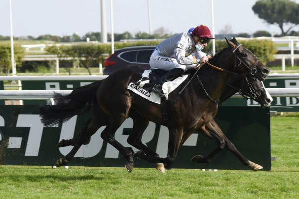 Photo de TAWFAN cheval de PLAT