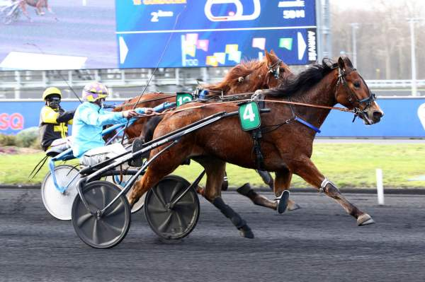 Photo de GADSEM cheval de TROT ATTELE