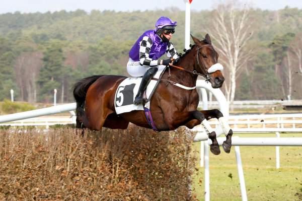 Photo de HAROWA cheval de STEEPLE CHASE