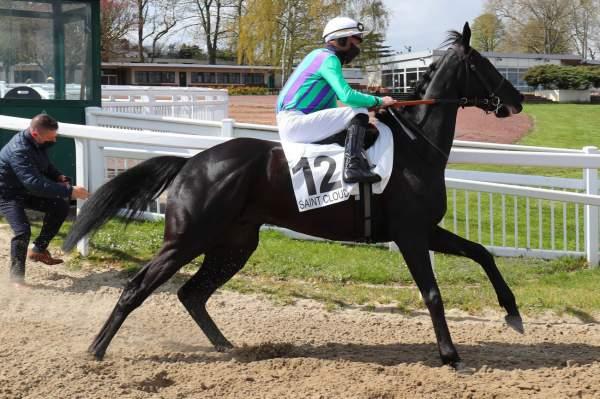 Photo de MILLTOP cheval de PLAT