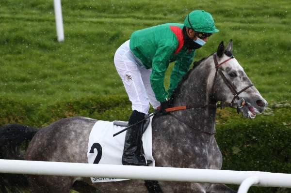 Photo de MIYAZ cheval de PLAT