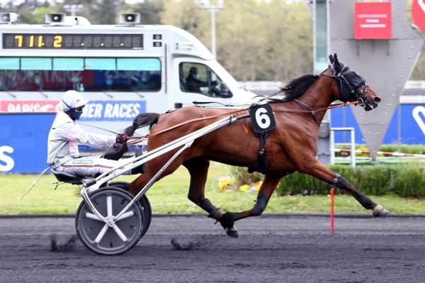 Photo de IBAYA DES FORGES cheval de TROT ATTELE