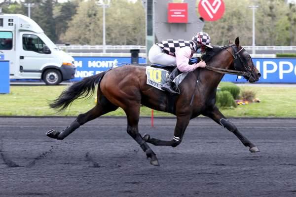 Photo de IMPACT CASTELETS cheval de TROT MONTE