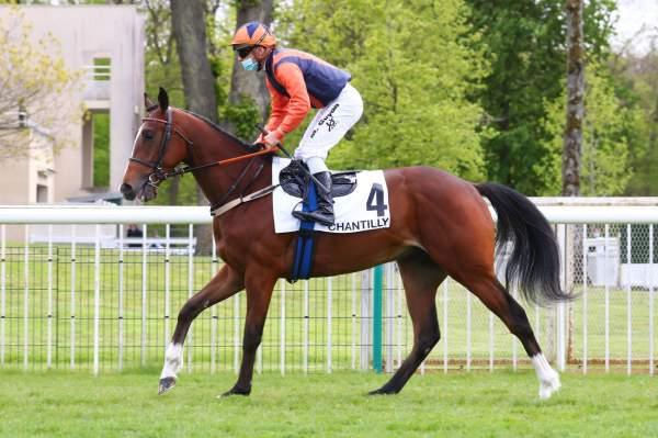 Photo de GORDON BREAK cheval de PLAT
