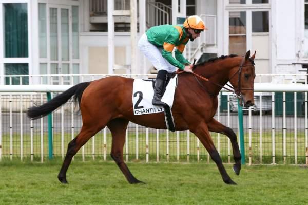 Photo de NEW CHANCE cheval de PLAT