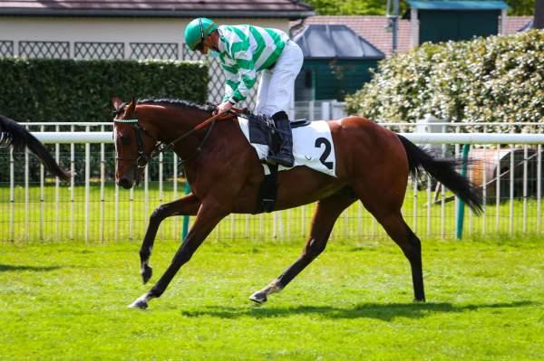Photo de HONNEUR'S LODESTAR cheval de PLAT