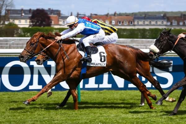 Photo de GOLDISTYLE cheval de PLAT