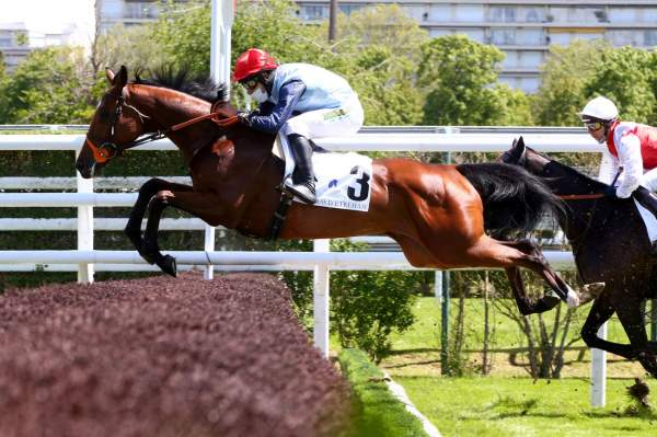 Photo de MATILDA DU BERLAIS cheval de HAIES