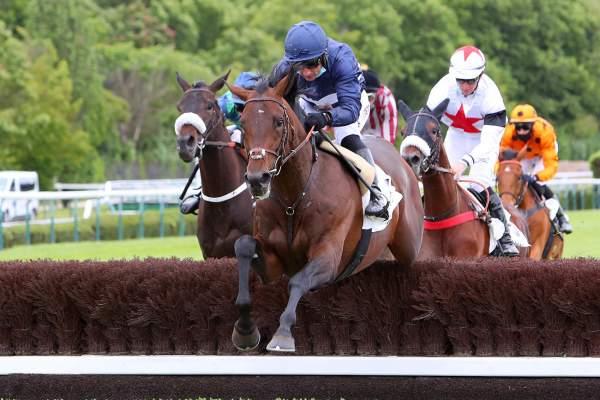 Photo de PARADISO cheval de HAIES