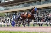La photo de Etonnant Arrivée Quinté PMU Prix des Ducs de Normandie Hippodrome de Caen 19/05/2021