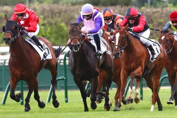 Photo de KAMA CHOPE cheval de PLAT