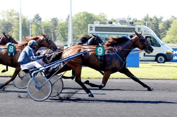 Photo de GUARDIA cheval de TROT ATTELE