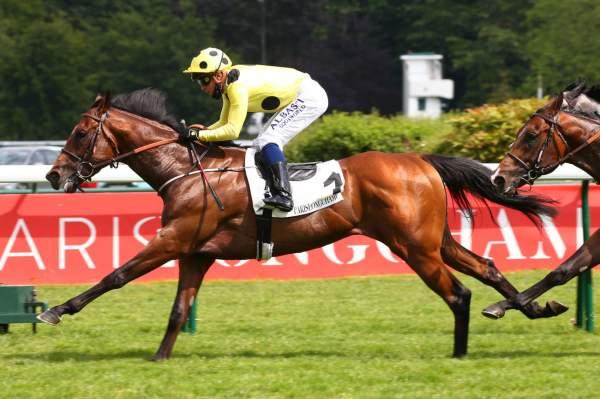 Photo de PINWHEEL cheval de PLAT