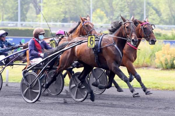 Photo de TJACKO ZAZ cheval de TROT ATTELE