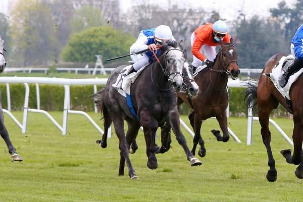 Photo de SPARKLIA cheval de PLAT