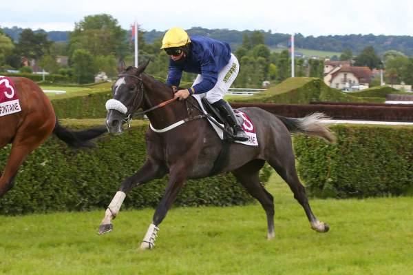Photo de IRONIQUE cheval de HAIES