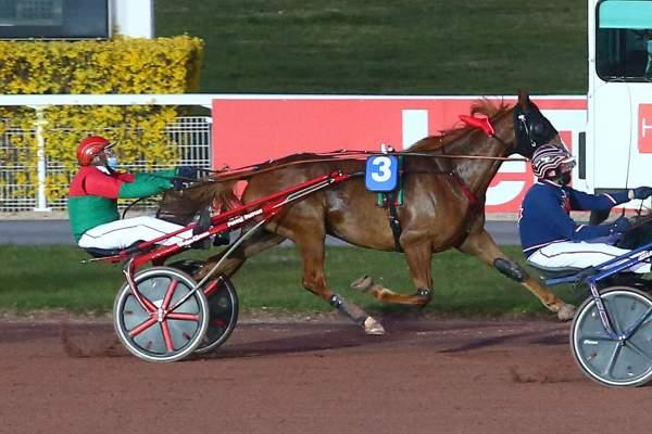 Photo de ELGINO cheval de TROT ATTELE